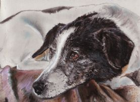 Pastel Print Jack Russell